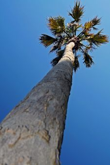 Free Palm Royalty Free Stock Photography - 681767