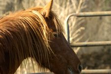 Free Horse Stalion In Spring Royalty Free Stock Photos - 683858