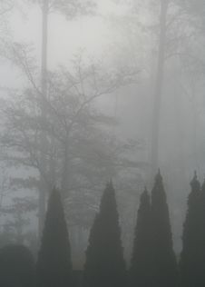 Free Fog Stock Photos - 684383