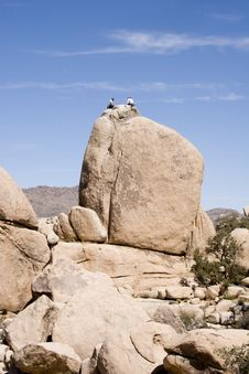 Free Sitting Atop A Boulder Royalty Free Stock Images - 684869