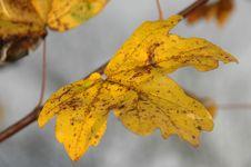 Free Autumn Branch Stock Image - 684901