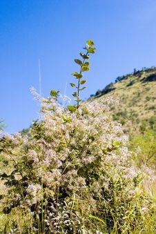Free Flower Bush Stock Images - 684934