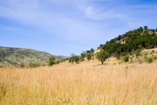 Free Grassy Landscape Royalty Free Stock Images - 684939