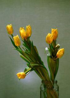 Free Bouquet Of Yellow Tulips Royalty Free Stock Image - 685226