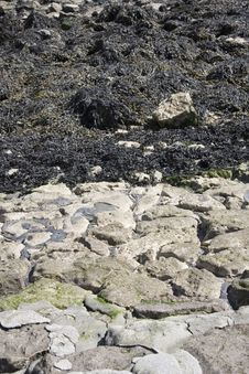 Free Seaweed Nad Rocks Royalty Free Stock Photo - 685555