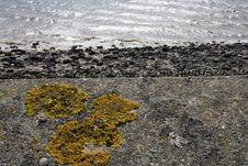 Free Fungus And Sea Stock Image - 685591