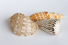 Free Shell Collection Royalty Free Stock Photos - 685868