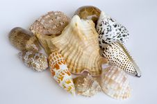 Free Shell Collection Royalty Free Stock Image - 685876
