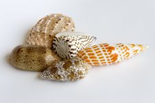 Free Shell Collection Stock Photography - 685882