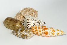 Free Shell Collection Stock Photo - 685890