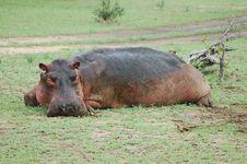 Free Hippo Stock Image - 686131