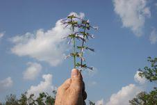 Hand Holding Wild Flowers Against Sky. Stock Photos