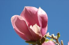 Free Pink Blossom Stock Photography - 686972