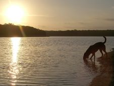 Free Dog Drinking From Lake Stock Photo - 687600
