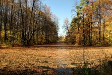 Free Autumn Pond. Royalty Free Stock Images - 687979