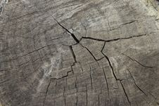 Free Old Cracked Wood Royalty Free Stock Photography - 688337