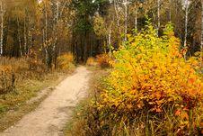 Free Solar Autumn Day. Stock Image - 688441