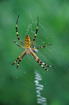 Free Spider Stock Photo - 688480