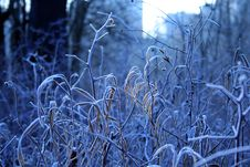 Free Hoarfrost On A Grass. Royalty Free Stock Images - 688769