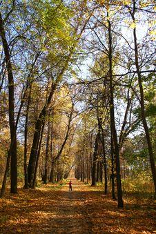 Free Autumn Park. Stock Photo - 688960