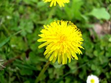 Free Flower Stock Photography - 689122