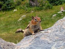 Free Small Chipmunk Royalty Free Stock Photography - 689237