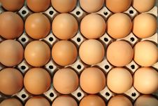 Free Eggs In Box Stock Photo - 689630