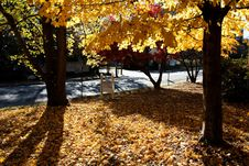 Free Fall Color Royalty Free Stock Images - 689789