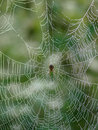 Free Spider Waits For Its Prey Royalty Free Stock Photos - 6802248