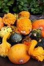 Free Pumpkins Orange Vegetables Stock Photo - 6804990