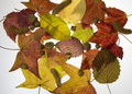 Free Fall Leaves Royalty Free Stock Images - 6806099