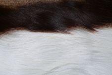 Free Antelope  Fur Stock Photography - 6800112