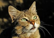 Free Eyes Of Lady-cat Royalty Free Stock Images - 6800439