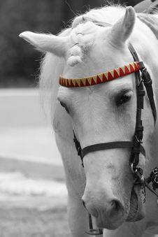 Free Ponny Stock Photo - 6801030