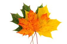 Free Leaves Stock Images - 6801034