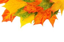 Free Leaves Stock Photo - 6801150