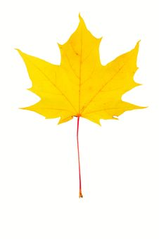 Free Leaves Royalty Free Stock Image - 6801186