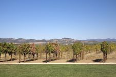 Free Vineyard On A Sunny Day Stock Images - 6801474