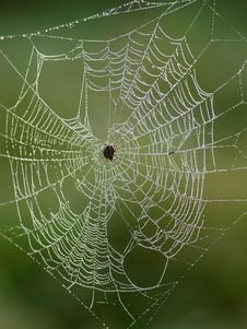 Free Spider Waits For Its Prey Royalty Free Stock Photo - 6802225