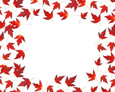 Free Isolated Red Maple Leaves Stock Images - 6802534