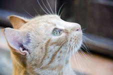Free Cat Portrait Stock Image - 6803151