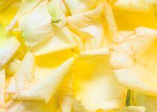 Free Rose Petal Background Stock Photo - 6803530