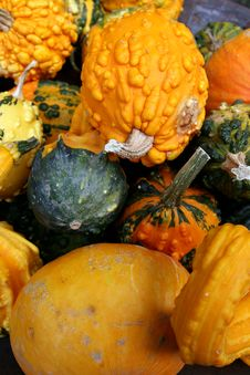 Free Pumpkins Royalty Free Stock Image - 6803956