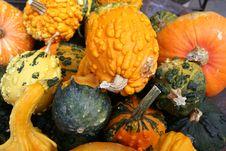 Free Halloween Pumpkins Royalty Free Stock Photography - 6804057