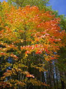 September Neon Royalty Free Stock Image