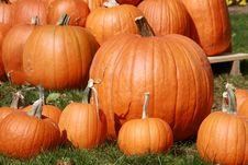 Free Pumpkins Royalty Free Stock Image - 6804836