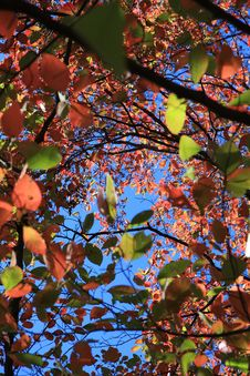 Free Fall Leaves Background Royalty Free Stock Photos - 6804838