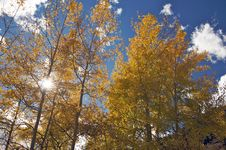 Free Colorful Aspen Pines Stock Images - 6804844