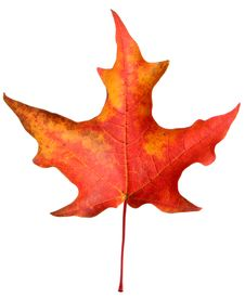 Free Colorful Autumn Leaf Stock Image - 6804871