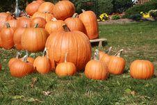 Free Pumpkins Stock Photos - 6804903